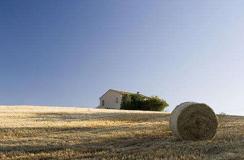 Coefficienti annuali adeguamento canoni fitto agrario