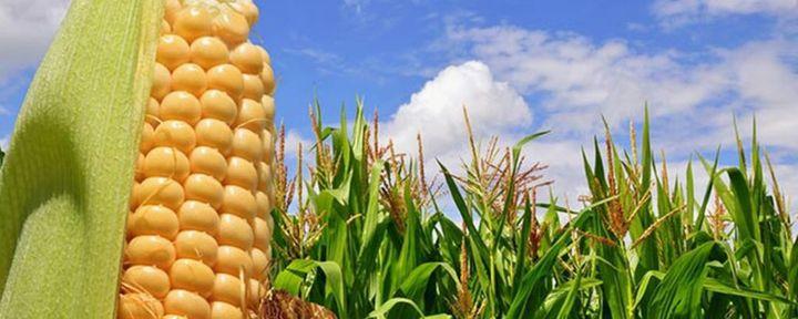 """Commodities agricole: """"L'impennata dei prezzi colpisce le produzioni"""""""
