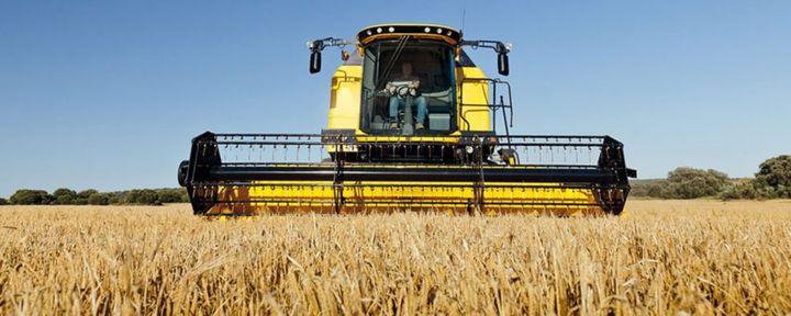Trebbiatura 2021: meno grano ma di alta qualità, a tutto vantaggio della filiera della pasta totalmente made in Italy