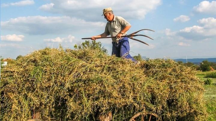Coltivatori diretti, coloni, mezzadri e imprenditori agricoli professionali: contributi obbligatori dovuti per l'anno 2021