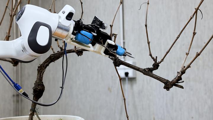 In arrivo entro il 2022 il robot intelligente per la potatura del vigneto