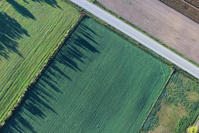 ISMEA – Banca delle terre agricole: vendita del secondo lotto di terreni