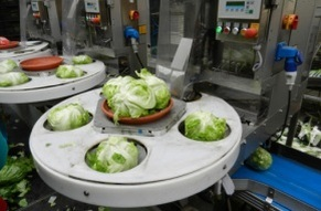 Enapa, novità sulla disoccupazione agricola