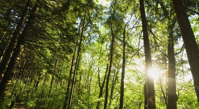 """L'Italia partecipa al progetto """"Livingagro"""": focus su olivi e boschi per il pascolo"""