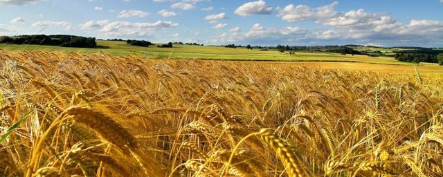 La Russia blocca l'export di cereali. Confagricoltura: Mercato Ue al riparo, puntiamo ad aumentare produzione italiana