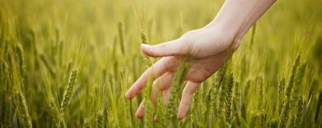 Bando Confagricoltura e JTI Italia: 70 mila euro per finanziare progetti di agricoltura sociale e di valore