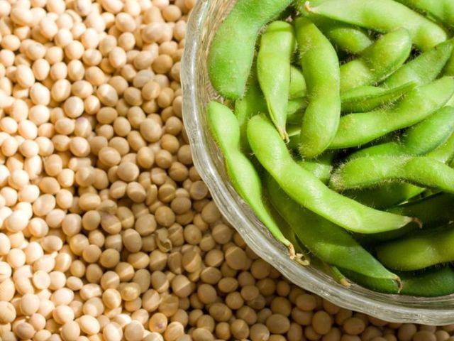 CNR: le piante leguminose possono sostituire il concime chimico