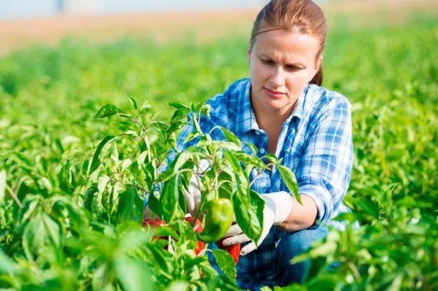 Mutui agevolati in favore dell'imprenditoria femminile in agricoltura
