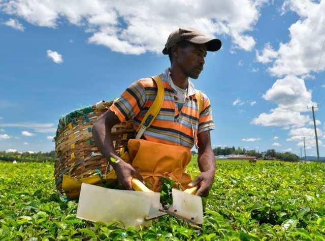 Regolarizzazione lavoratori nel settore agricolo. Contributo forfettario.