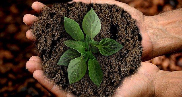 Bellanova: Sostenibilità e salute alimentari cruciali per l'Italia. Lavoriamo per promuovere la diversificazione delle produzioni agricole