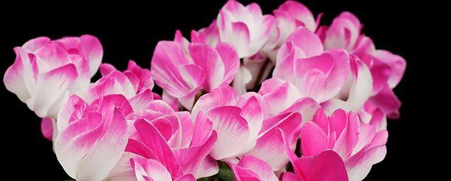 Florovivaismo: Ripartire puntando su verde, economia e ambiente
