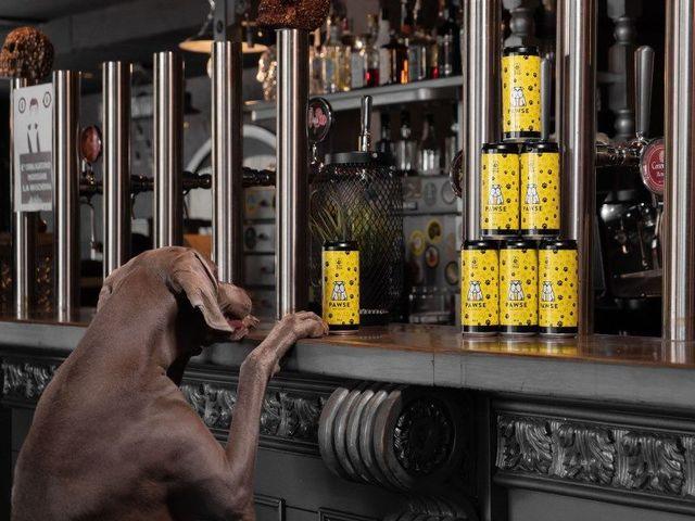 Arriva la birra per cani 100% italiana