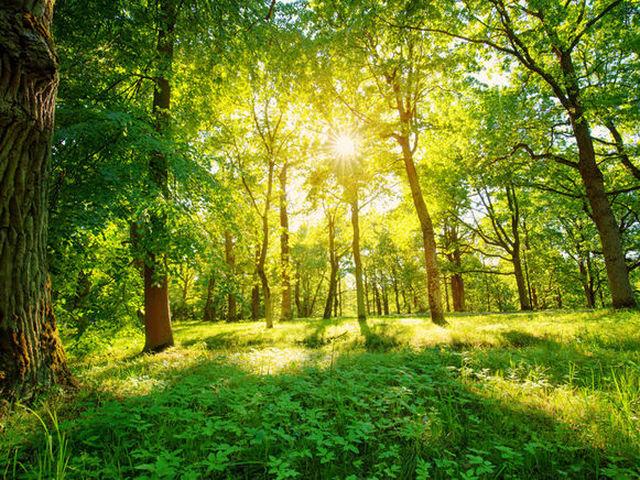La Commissione europea ha presentato la Strategia Forestale dell'UE per il 2030
